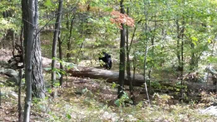 Unbelievable Photos - Bearly Escaped