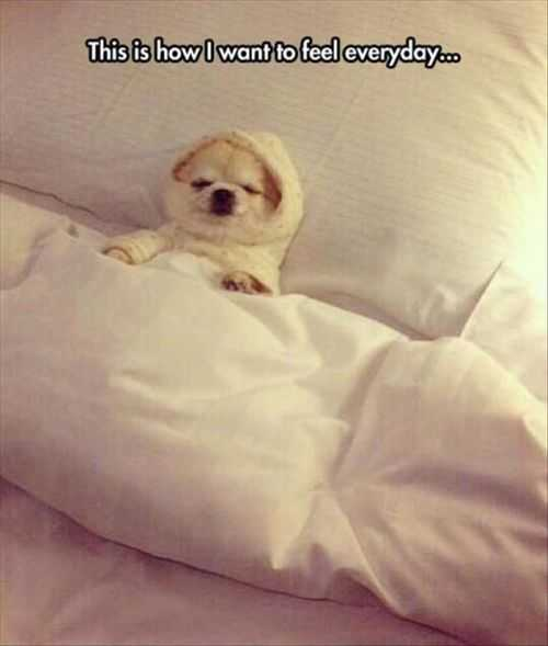 How I Want To Feel Everyday. Little Dog Sleeping In Bed