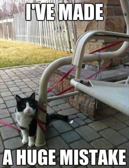 I Have Made A Huge Mistake. Cat Tangled Up In Leash