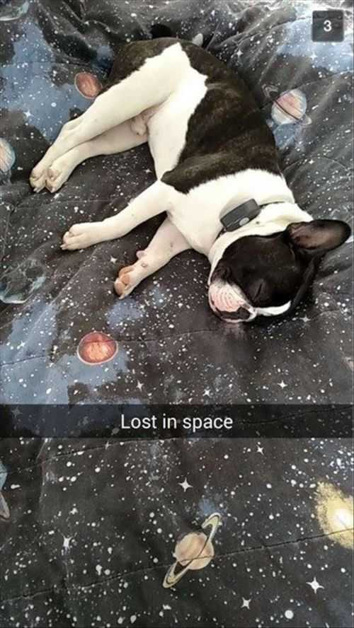 Lost In Space. Little Dog On Space Sheets