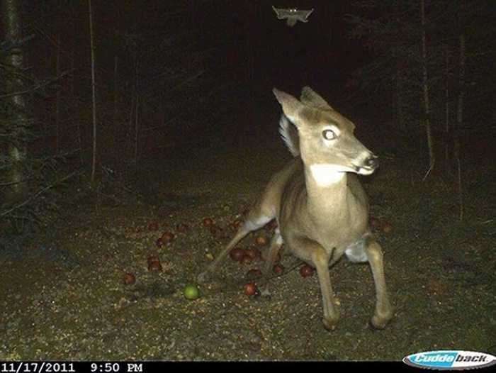 Crazy Trail Cam Pictures (4)