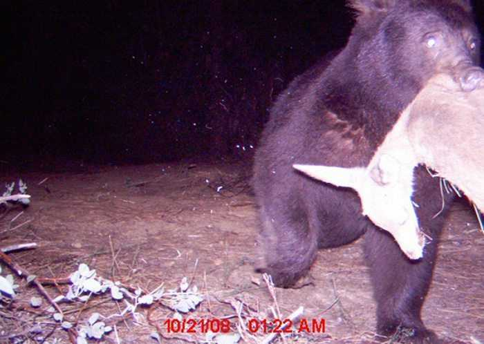 Crazy Trail Cam Pictures (7)