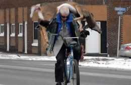 Guy Carries His Deer To The Butcher On His Bicycle Video Featured