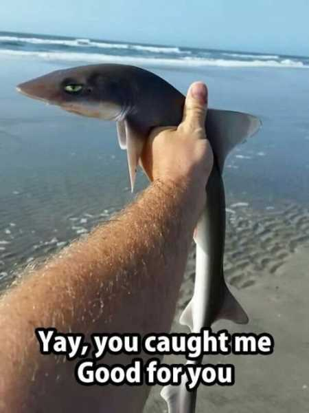 Very Funny Pictures You Will Enjoy 009