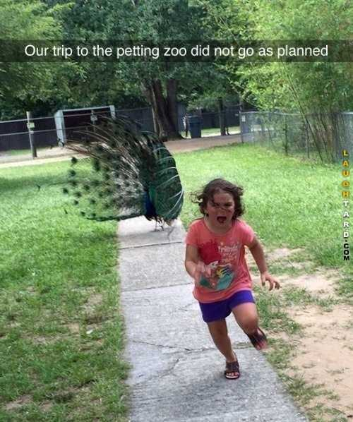 Hilarious Funny Images  Don'T Pet The Peacock