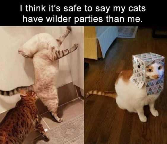 Hilarious Funny Images  Cat Party