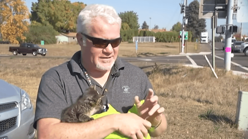 5 Week Old Kitten Named Sticky Found Glued To Busy Oregon Road 0 16 Screenshot