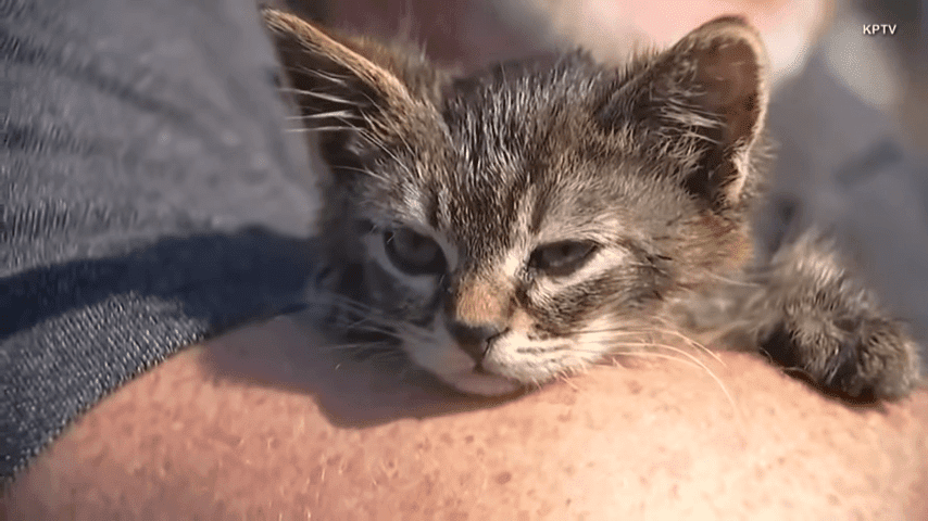 5 Week Old Kitten Named Sticky Found Glued To Busy Oregon Road 0 20 Screenshot