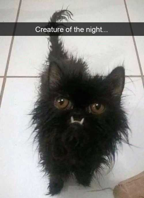 Funny Creature Of The Night