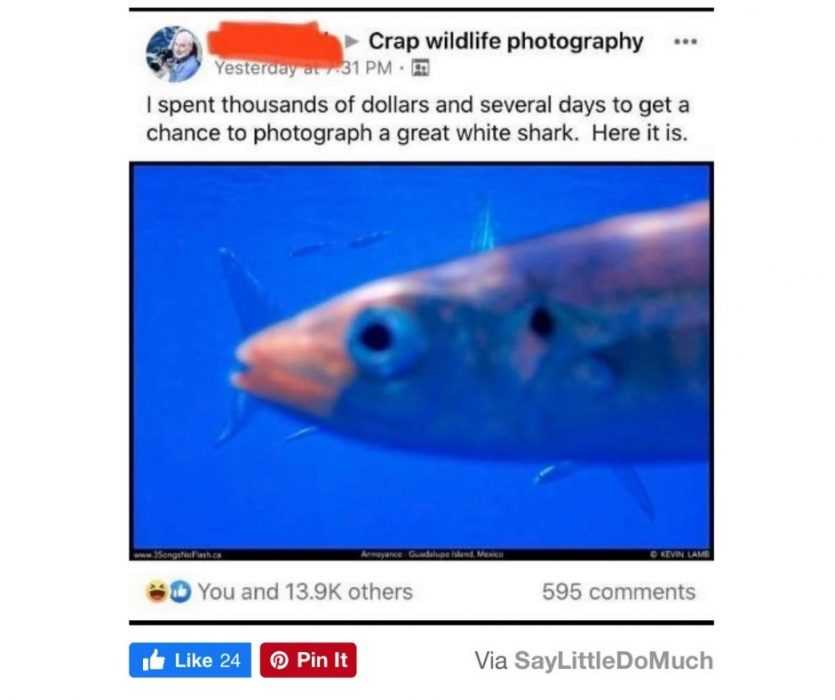 Worry For Humanity  Life Fails  Fish For Brains