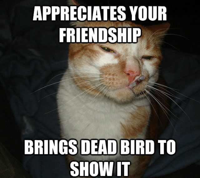Funny Animal Memes  Cat With Attitude