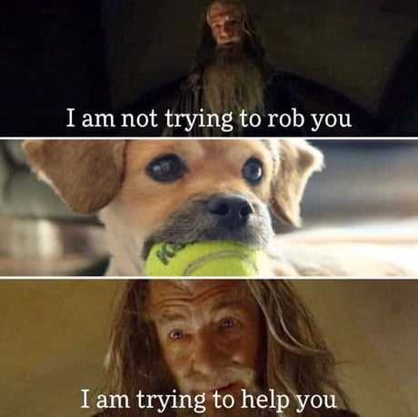 Funny Animal Memes Dog Does Not Believe Your Good Intentions