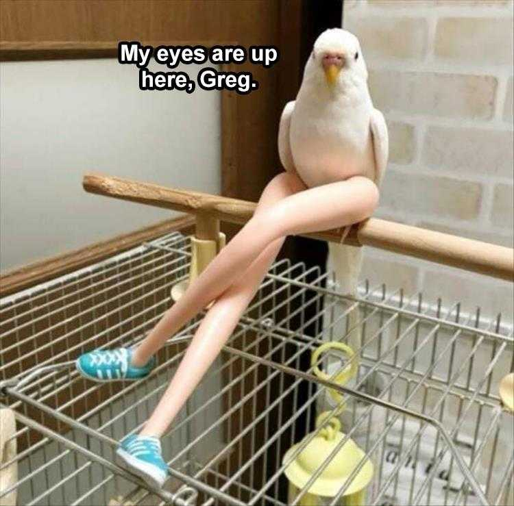 Funny Pet Meme Pictures  Eyes Up