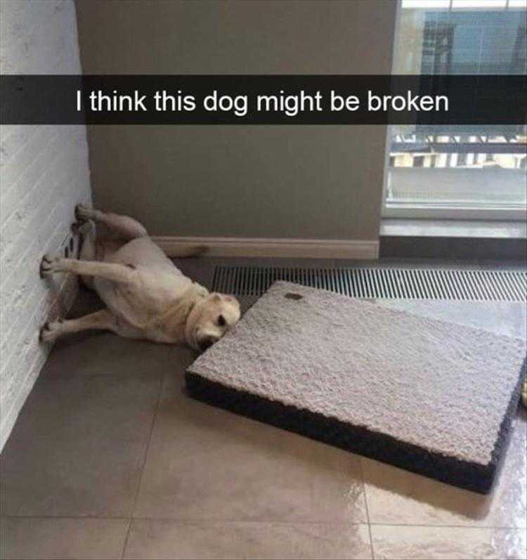 Funny Pet Meme Pictures  Gravity Is Overrated