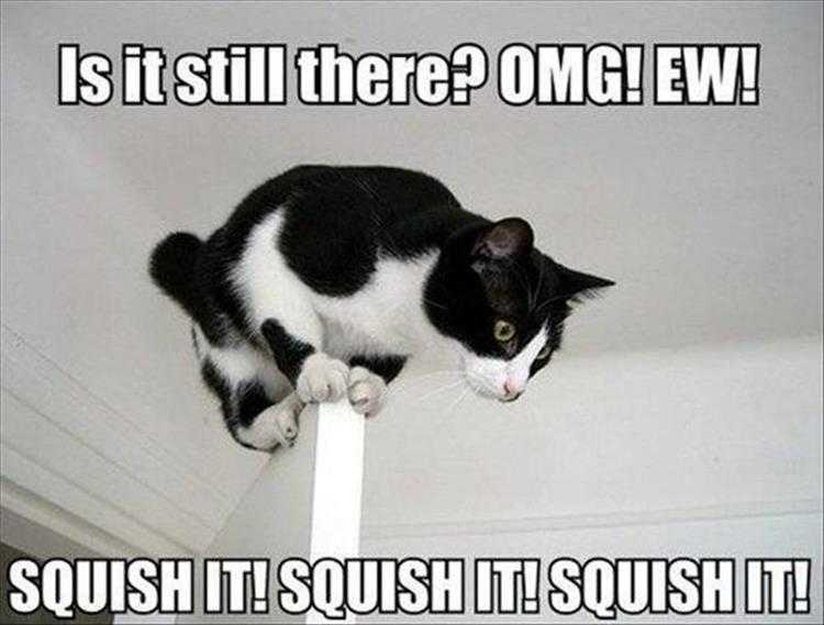 Funny Pet Meme Pictures  Spiders