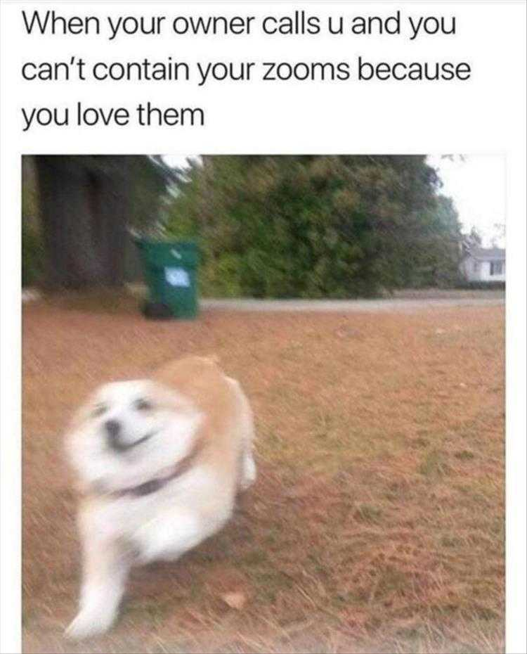 Funny Pet Meme Pictures  Zoom Zoom