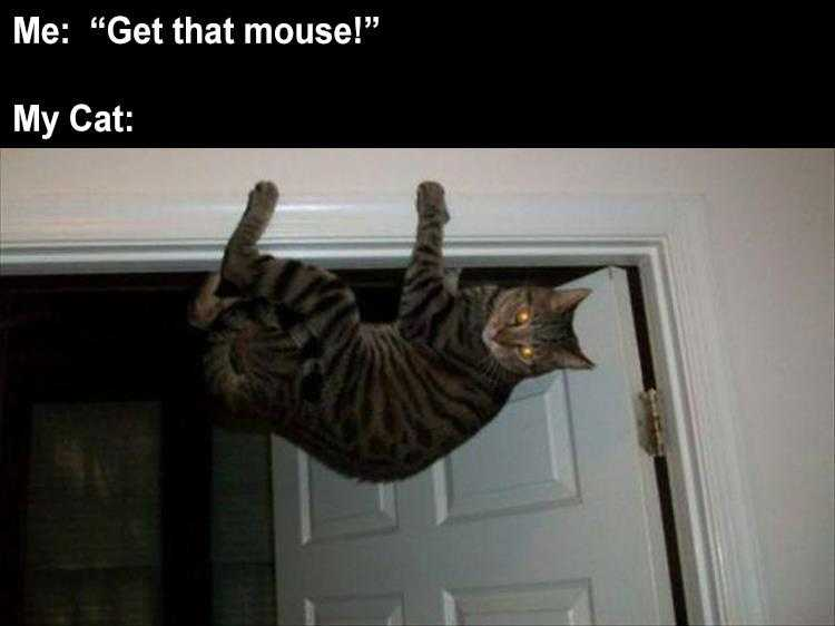 Funny Cat Meme Pictures  Mouse