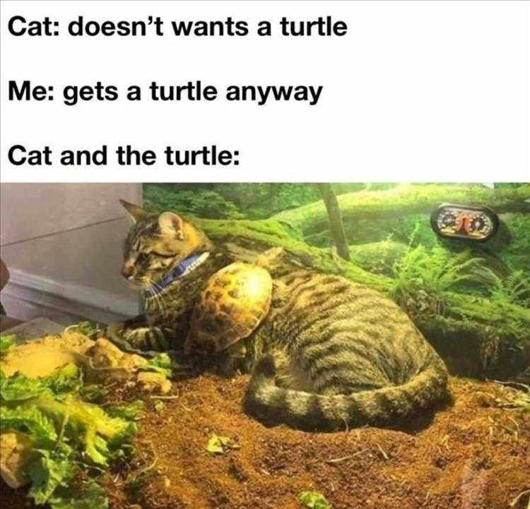 Funny Pictures With Captions  Turtle