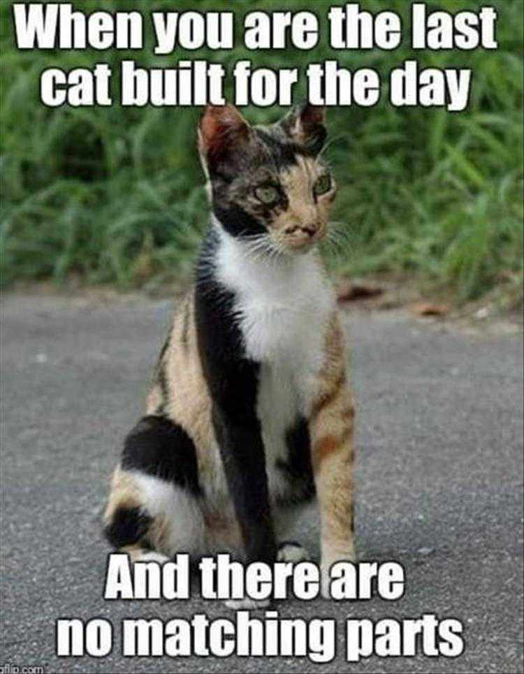 Funny Pictures With Captions  Junkyard Cat
