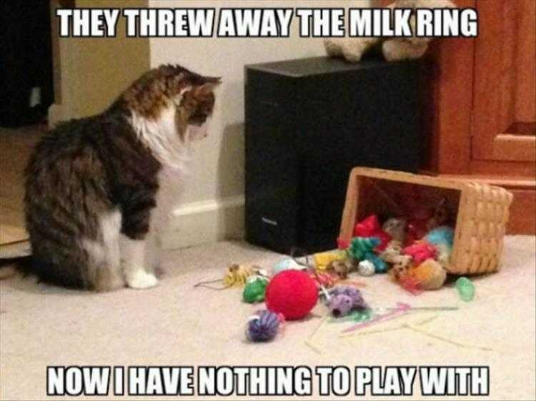 Funny Picture With Captions  Yarn