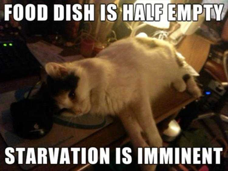 Funny Cat Picture With Caption  Outlook Not Good