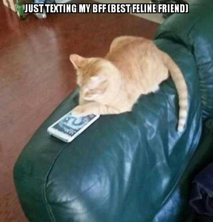 Funny Cat Picture With Caption  Keeping In Touch