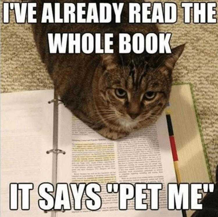 Funny Cat Pictures With Funny Caption  Pet Me