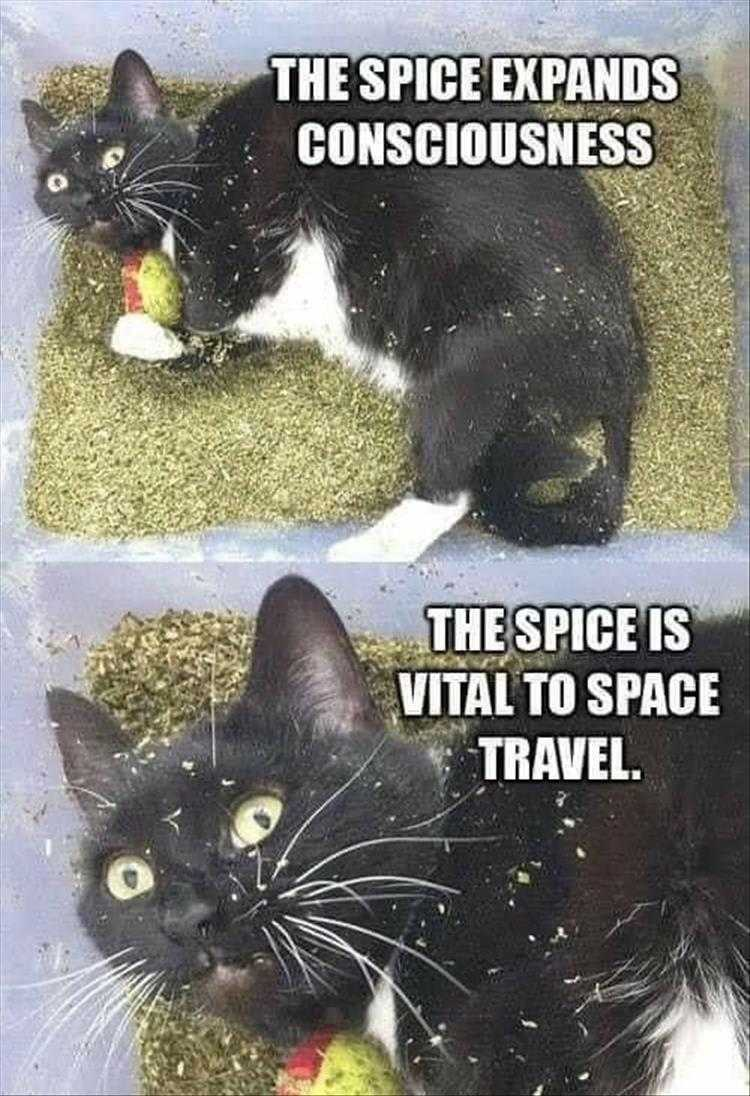 Funny Cat Pictures With Funny Captions  I See The Light