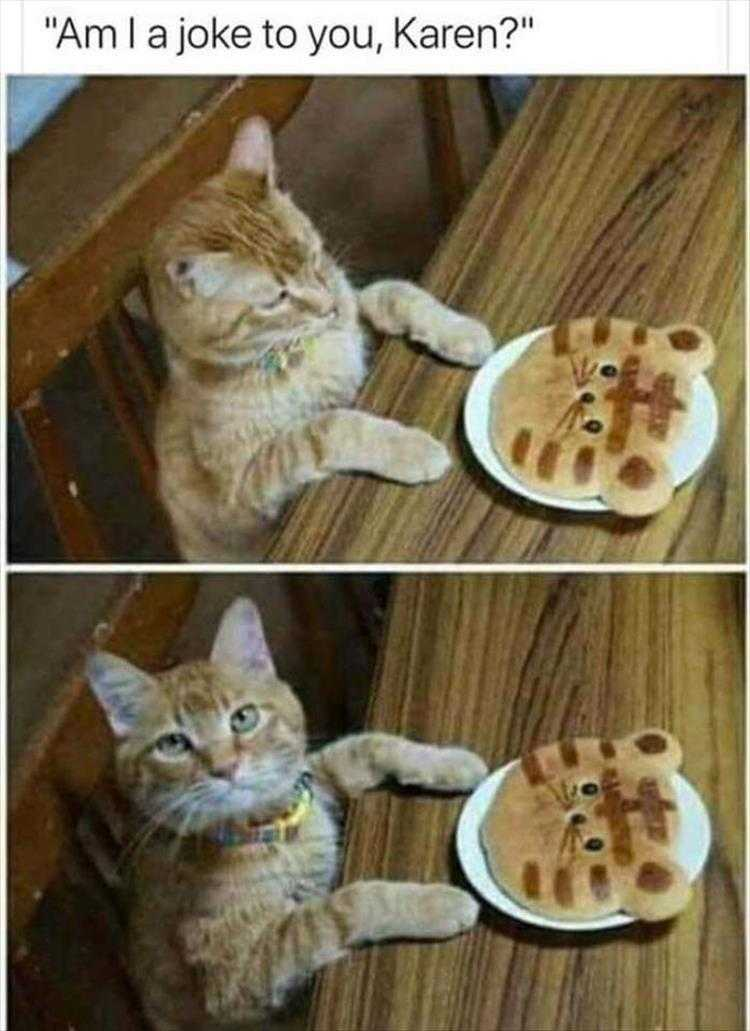Funny Cat Pictures With Funny Caption  Not Funny