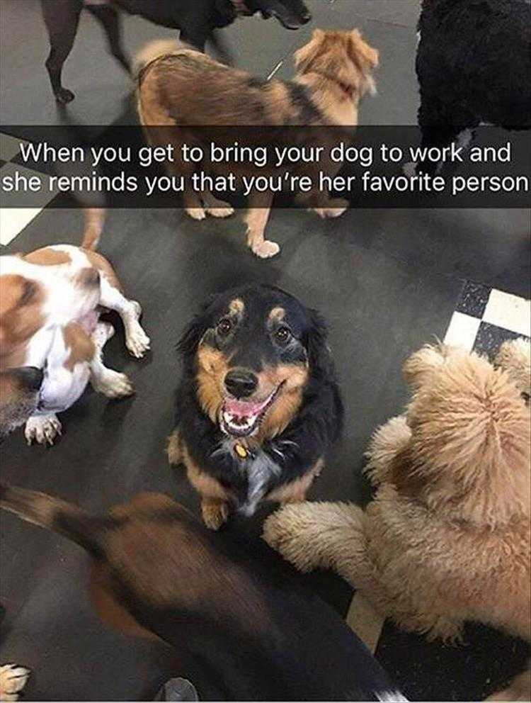 Funny Dog Pictures With Funny Caption  Favorites