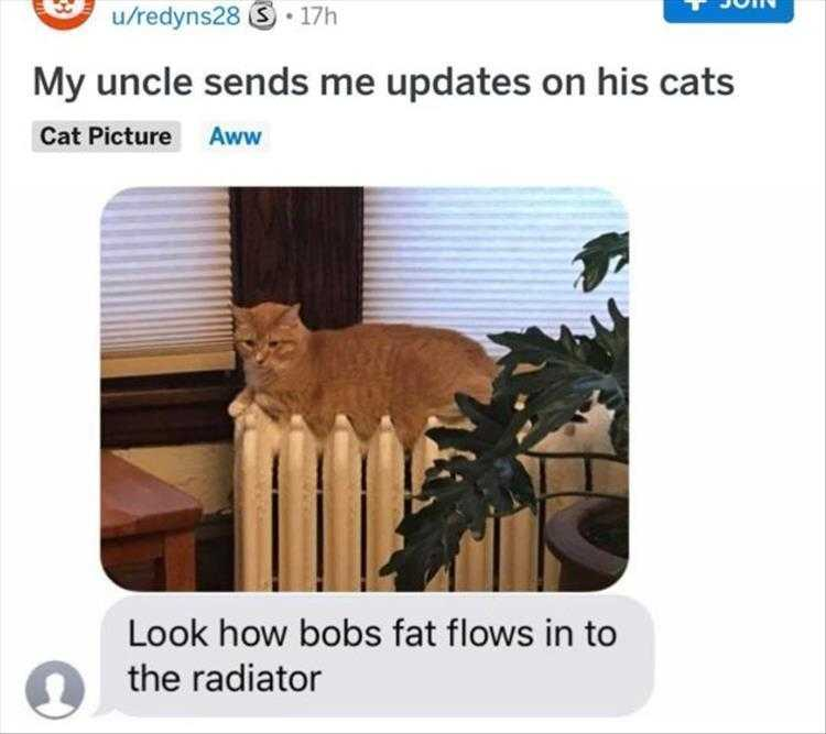 Funny Pictures With Funny Caption  Fat Melting