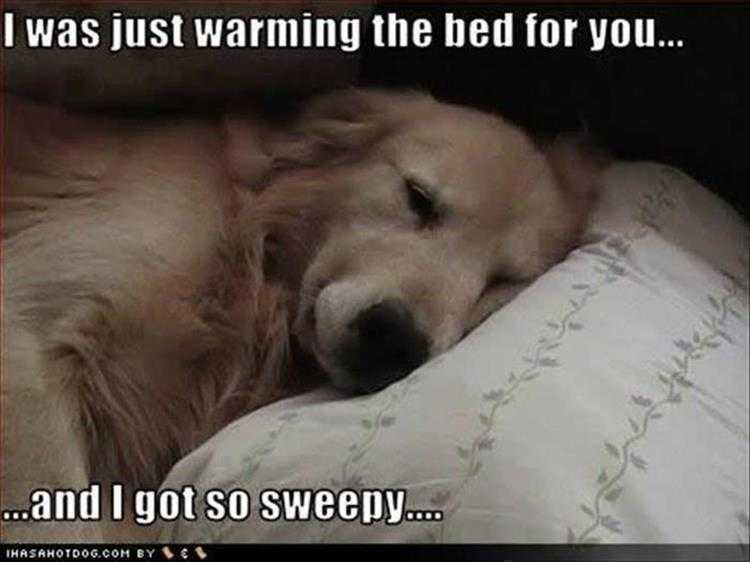 Funny Pictures With Funny Caption  Sweepy