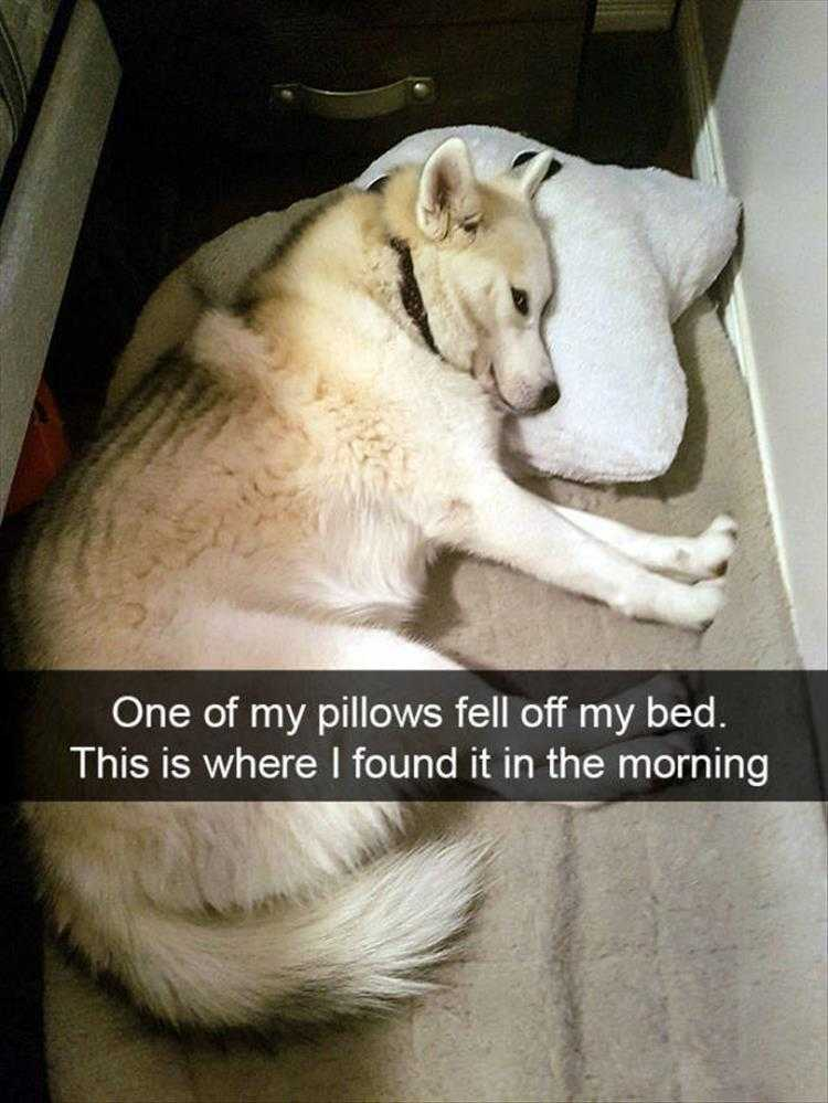 Funny Pictures With Funny Caption  Fallen Pillow