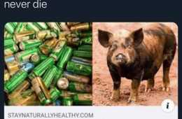 Top 30 Funny Animal Memes Of The Day 5Feb4457967Cb