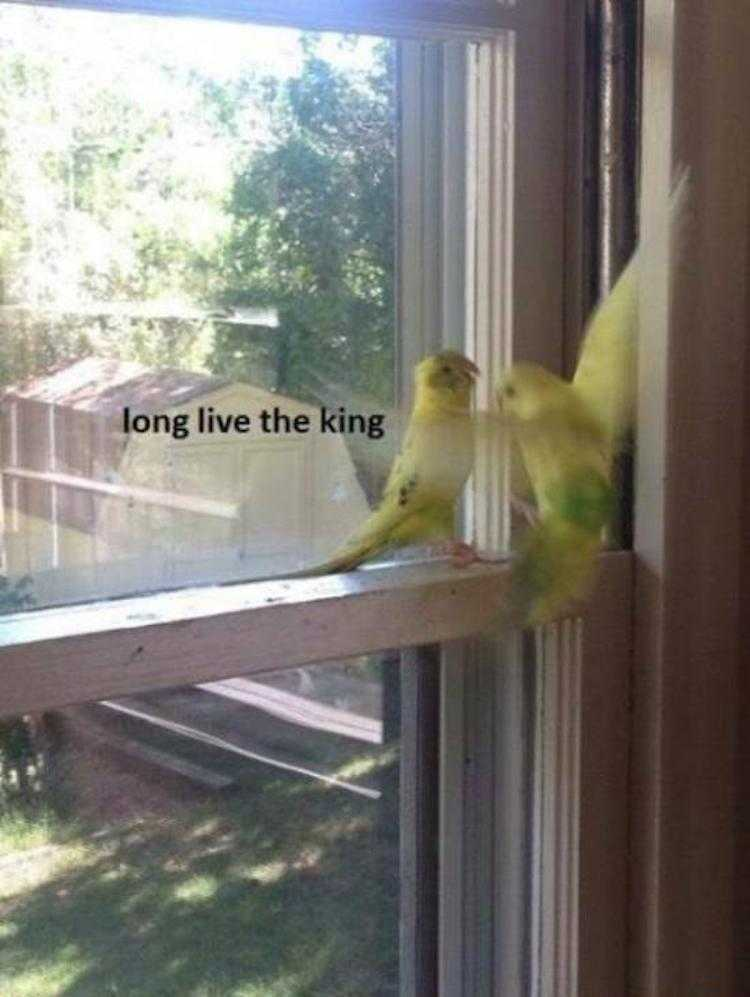 Funny Animal Pics With Caption  Budgies Paying Respect