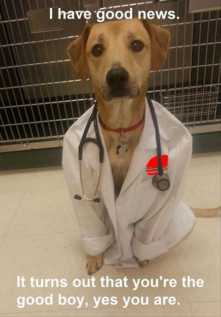 Funny Dog Pics With Captions  Doctor Dog