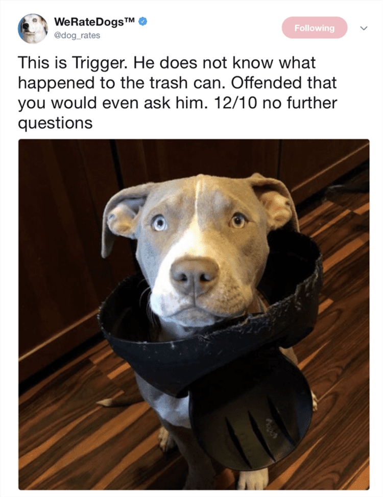 Funny Dog Pics With Caption  Dog Looking Innocent