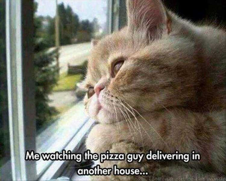 Funny Cat Pics With Captions  Cat Looking Envious