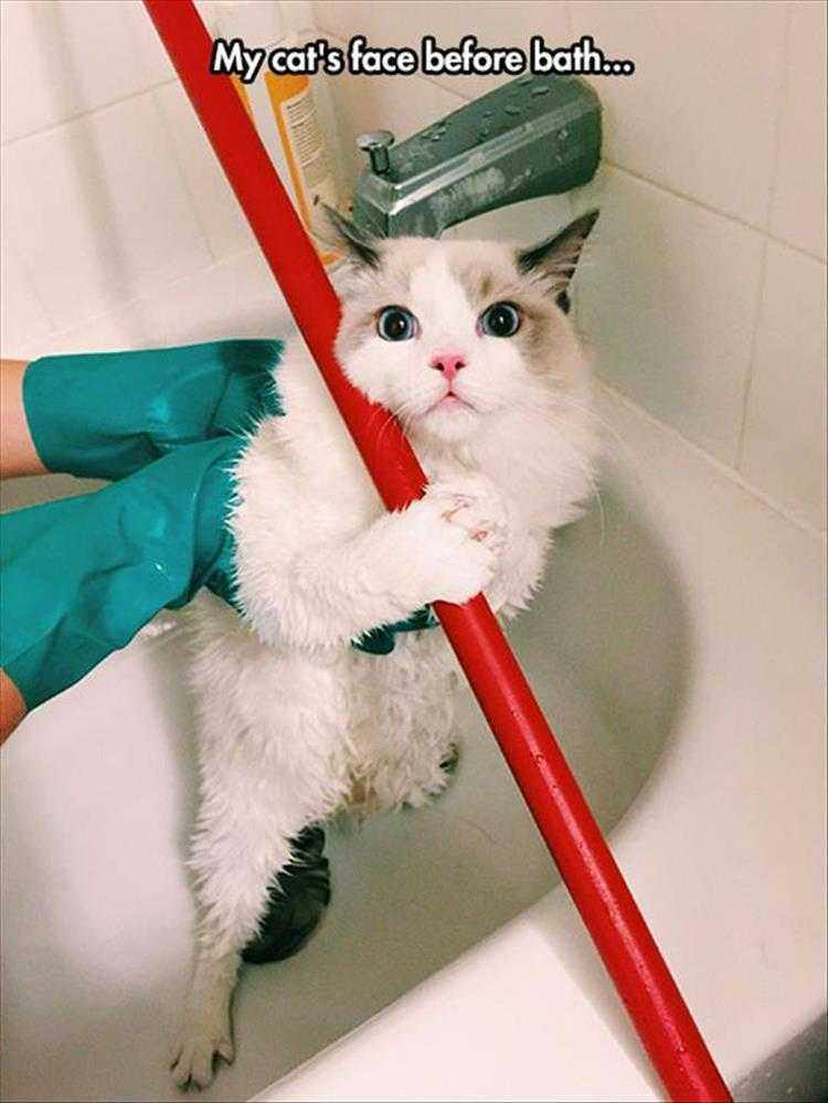 Funny Cat Pics With Captions  Before Bath