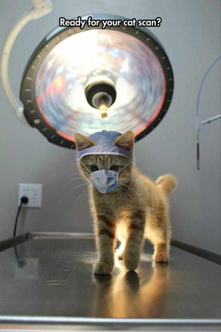 Funny Cat Pics With Jokes  Cat Scan