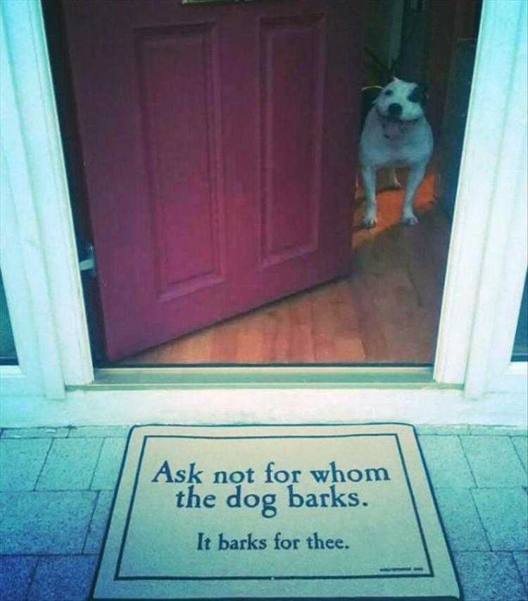 Funny Dog Pics With Quotes  Dog Philosophy