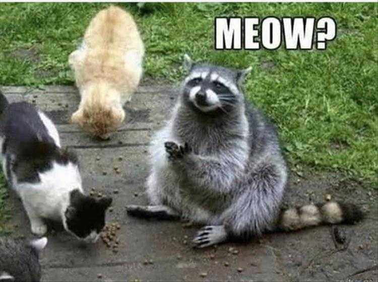 Funny Animal Photos With Captions  Could Almost Pass For A Cat