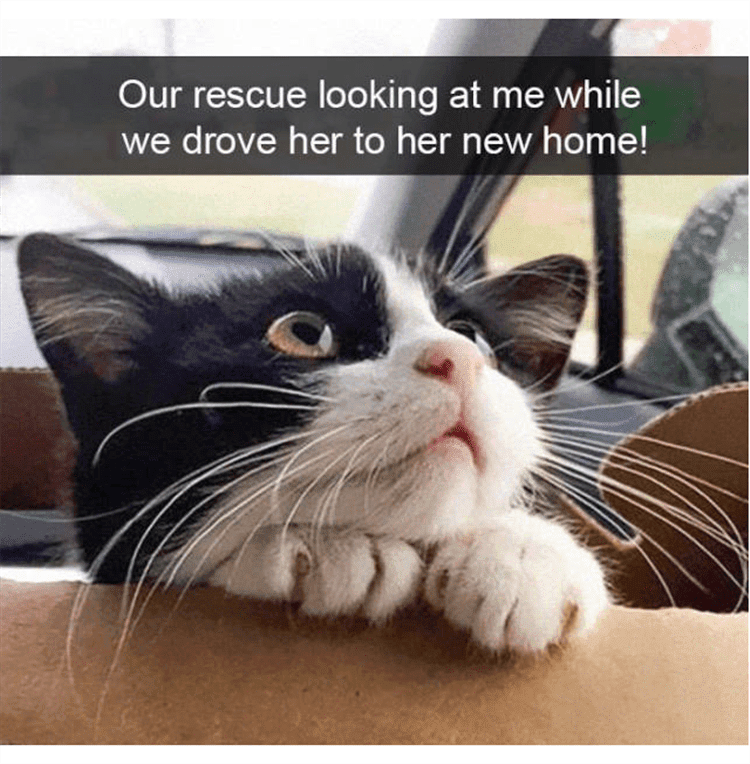 Funny Animal Photos With Captions  My Prince Charming