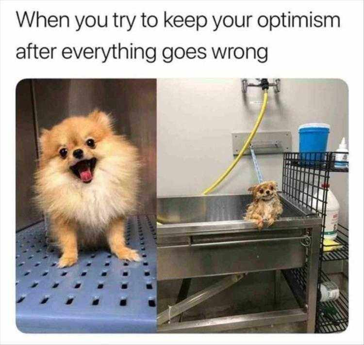 Funny Animal Photos With Captions  Day Ended Differently Than How It Started