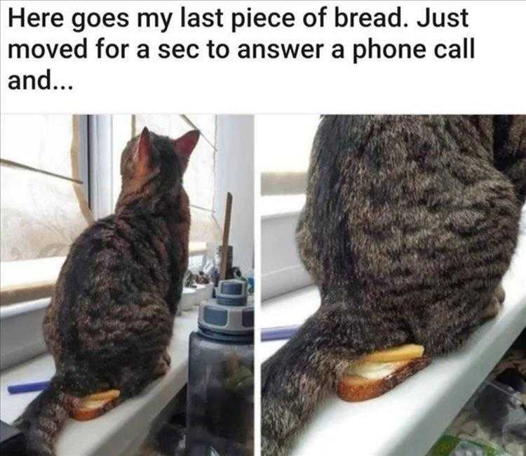 Funny Animal Photos With Captions  No Bread For You