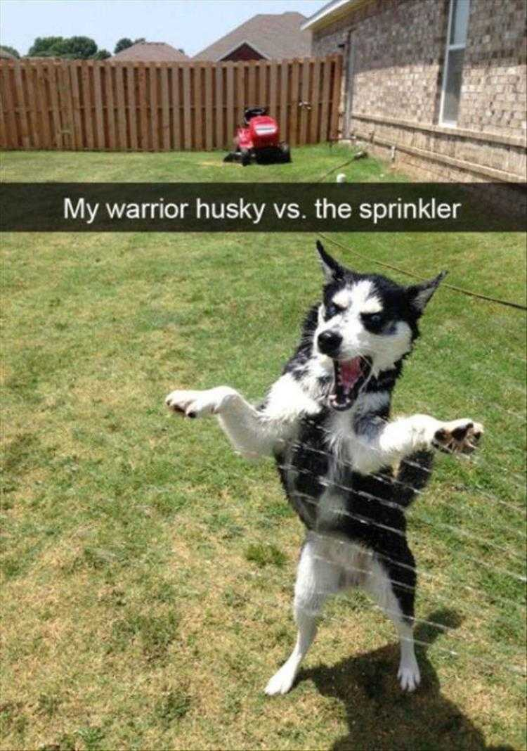 Funny Animal Photos With Captions  I Will End This Sorcery
