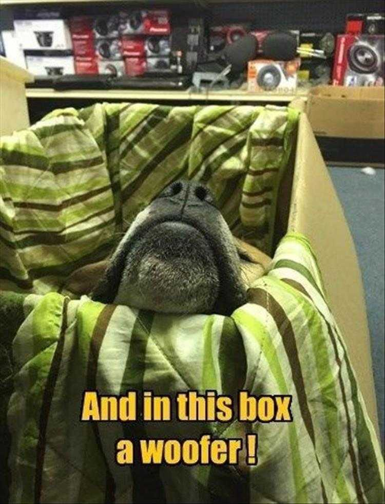 Funny Animal Photos With Captions  Super Woofer