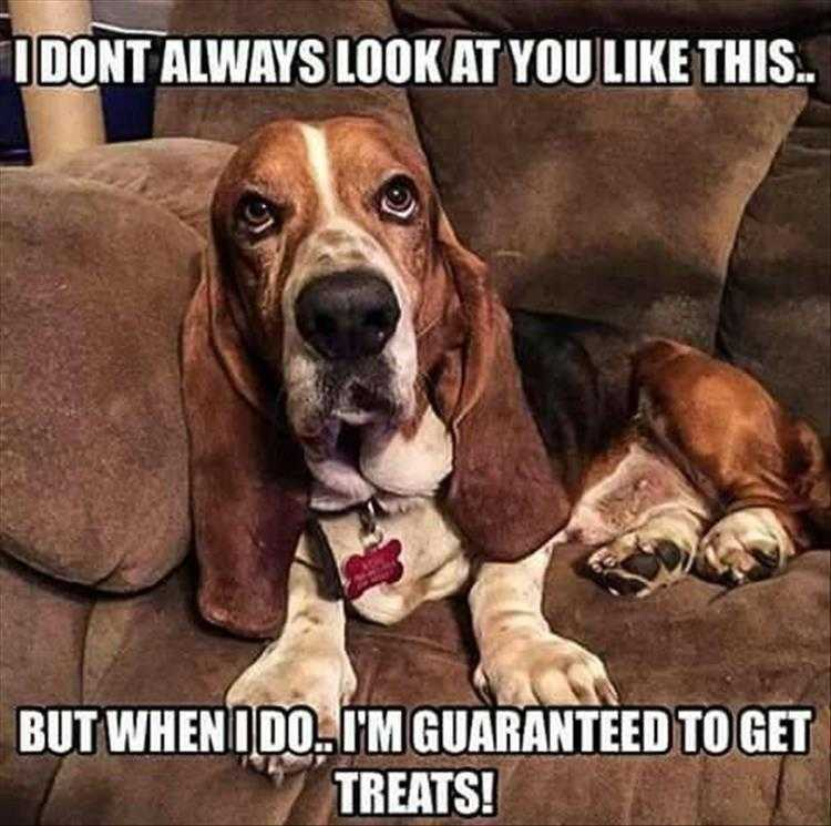 Funny Animal Photos With Captions  I Don'T Always Memes
