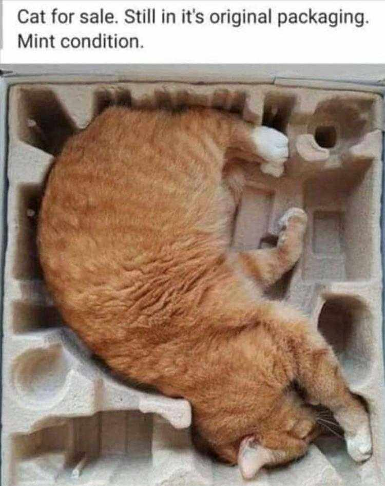 Funny Animal Photos With Captions  Kitten Unboxing