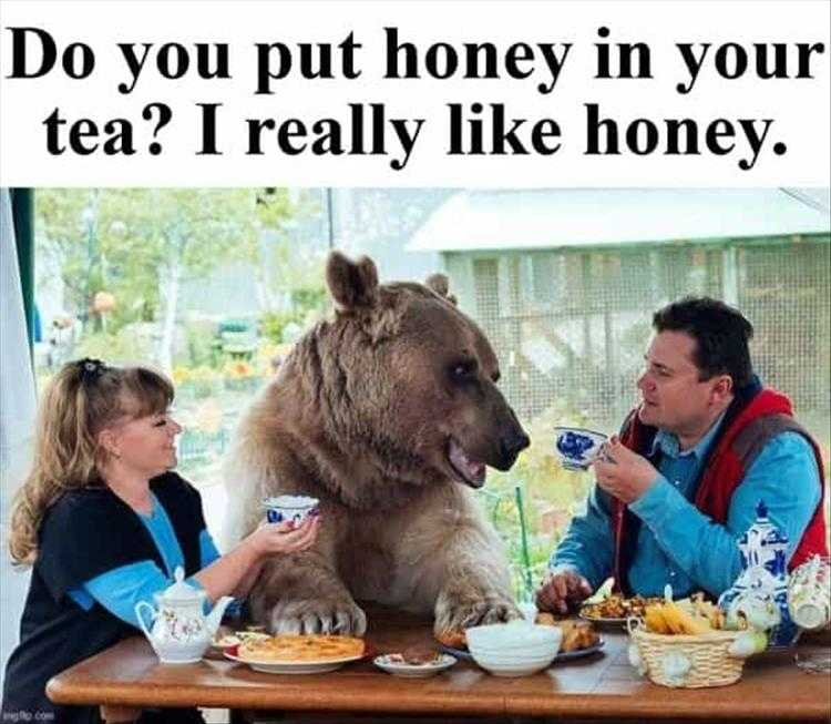 Hysterical Animal Pictures With Captions  Unbearably Cool Breakfast Conversations